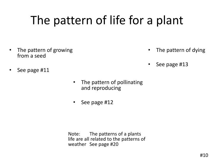 The pattern of life for a plant