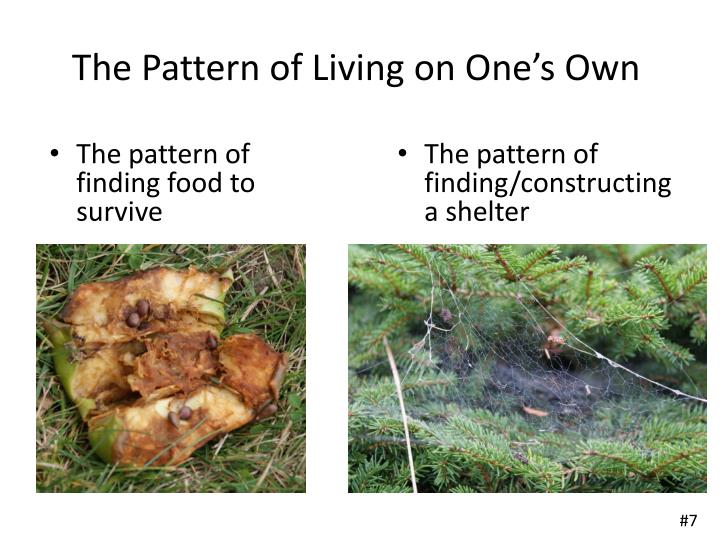 The Pattern of Living on One's Own