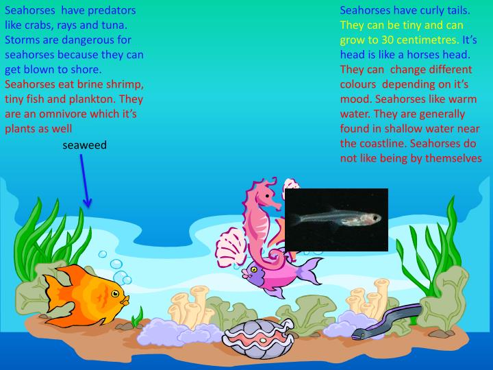 Seahorses have curly tails.