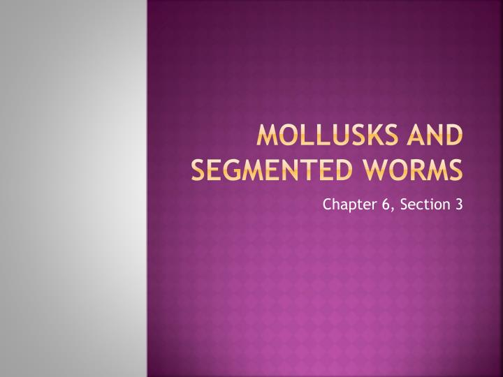 mollusks and segmented worms n.