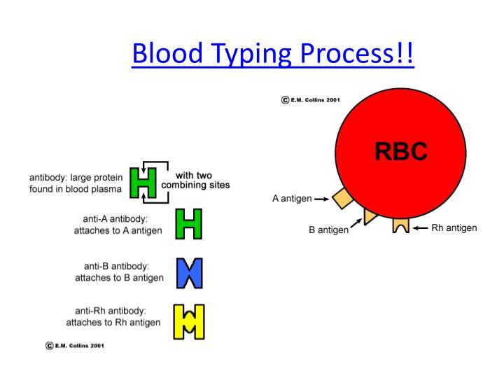 Blood Typing Process!!