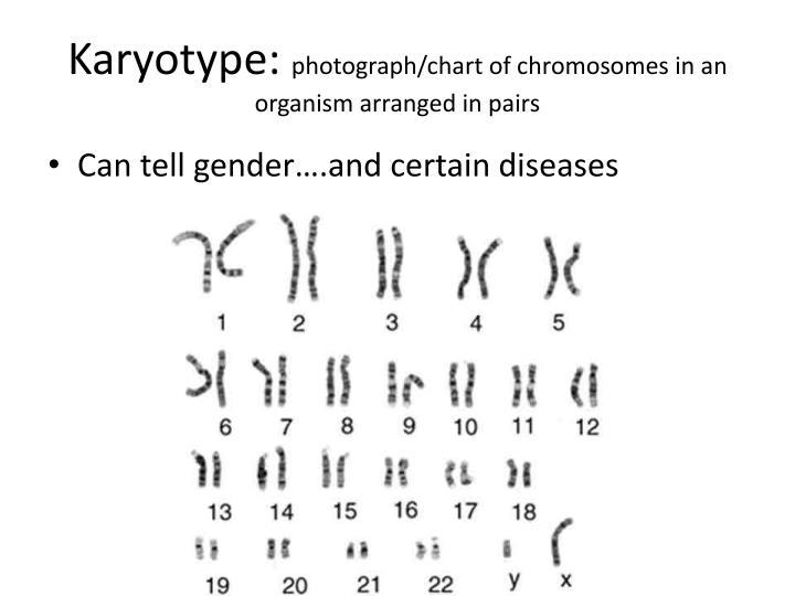 Karyotype: