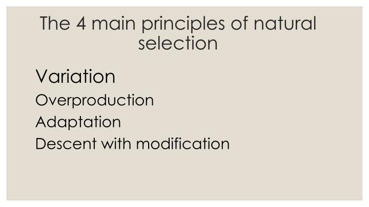 Natural Selection Ppt Presentation