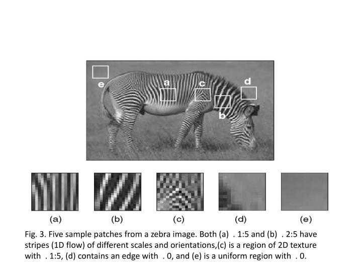 Fig. 3. Five sample patches from a zebra image. Both (a)  . 1:5 and (b)  . 2:5 have stripes (1D flow) of different scales and orientations,(c) is a region of 2D texture with  . 1:5, (d) contains an edge with  . 0, and (e) is a uniform region with  . 0.