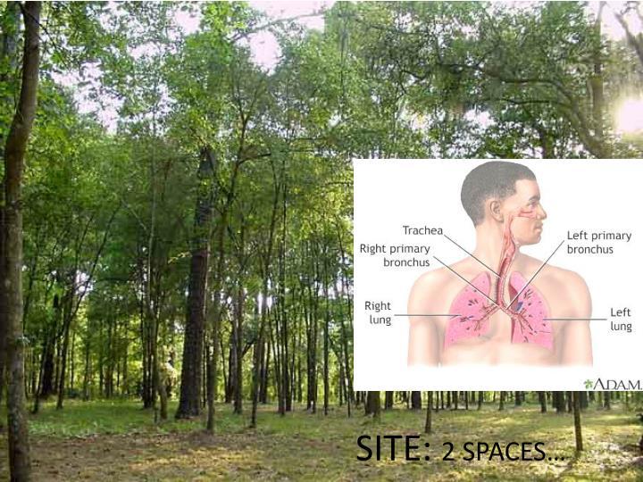 Site 2 spaces