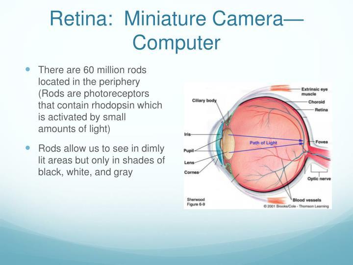 Retina:  Miniature Camera—Computer