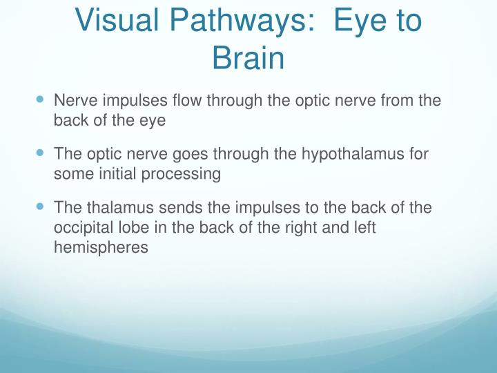 Visual Pathways:  Eye to Brain
