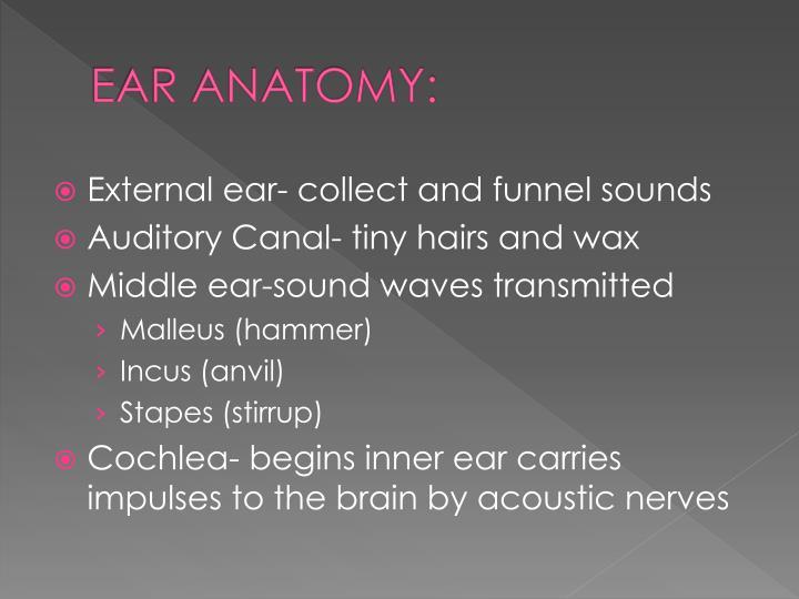 EAR ANATOMY: