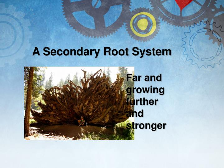 A Secondary Root System