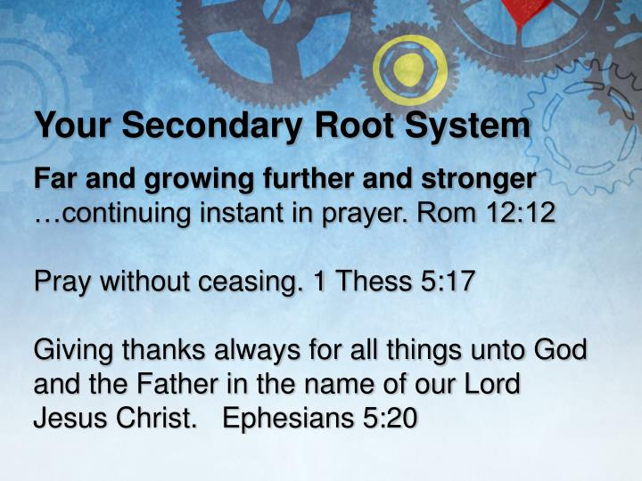 Your Secondary Root System