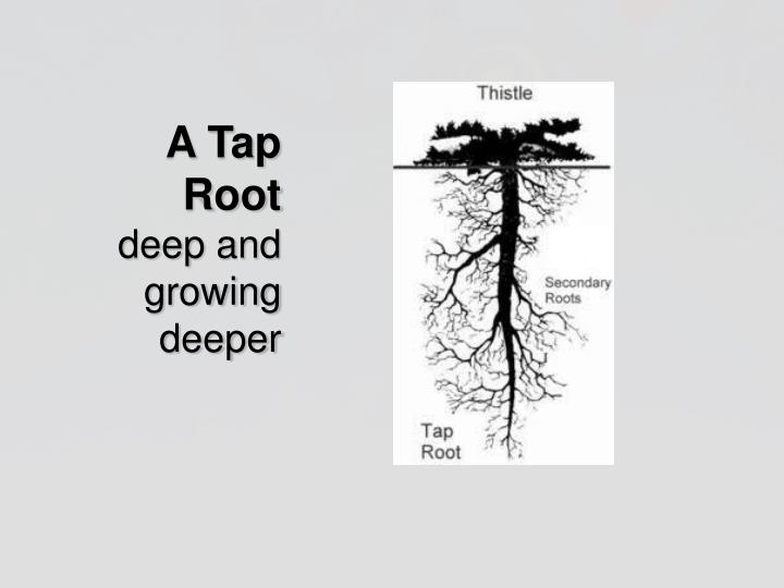 A Tap Root