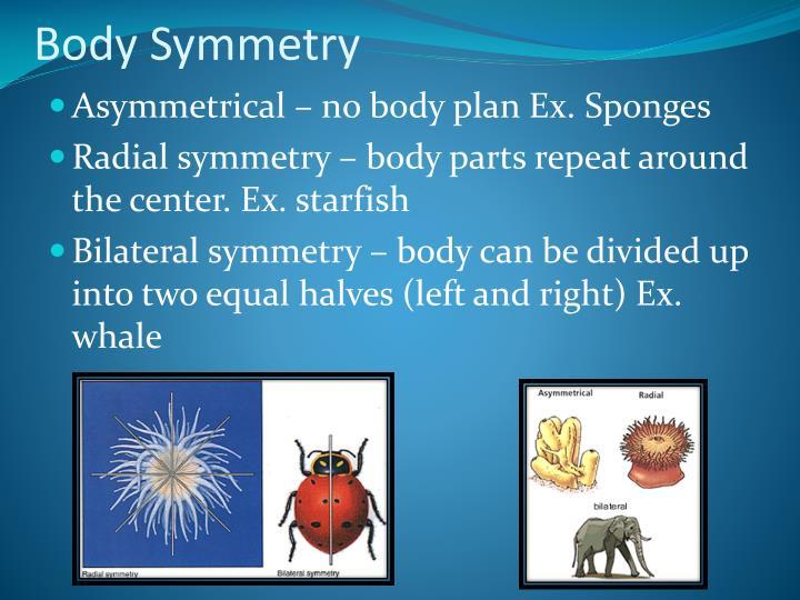 Body Symmetry