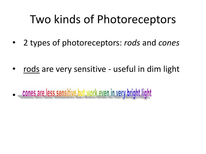 Two kinds of photoreceptors