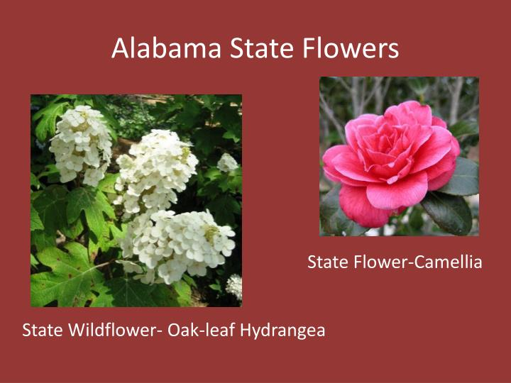 Alabama State Flowers
