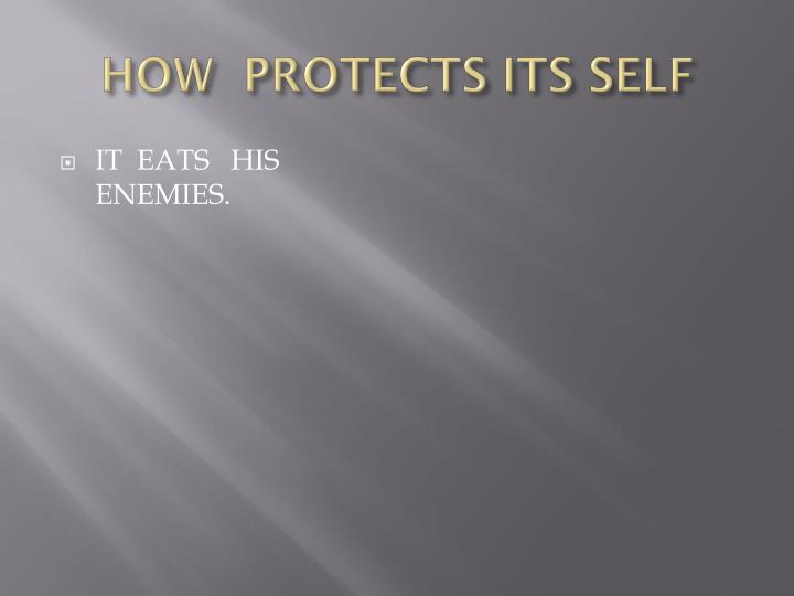 HOW  PROTECTS ITS SELF