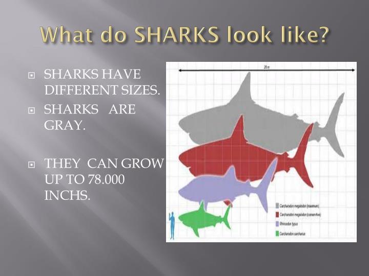 What do SHARKS look like?