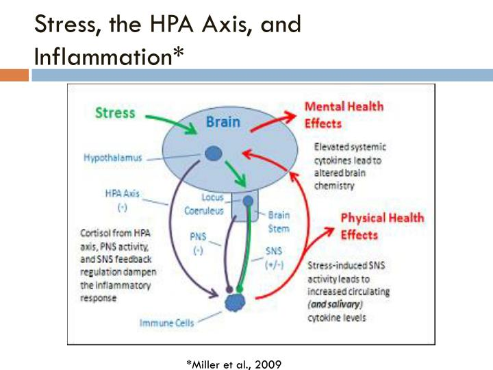 Stress, the HPA Axis, and