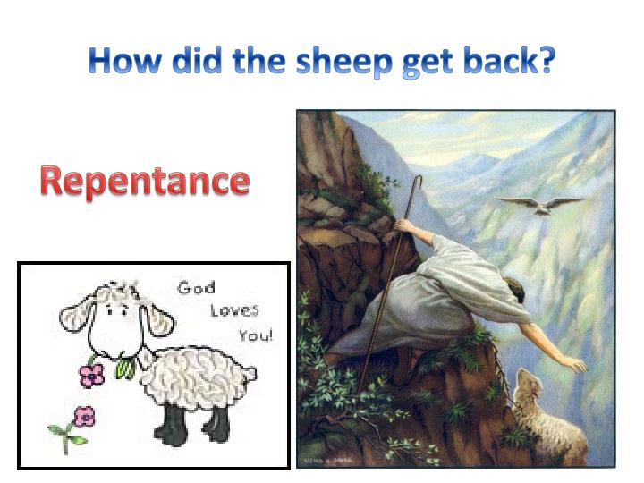 How did the sheep get back?