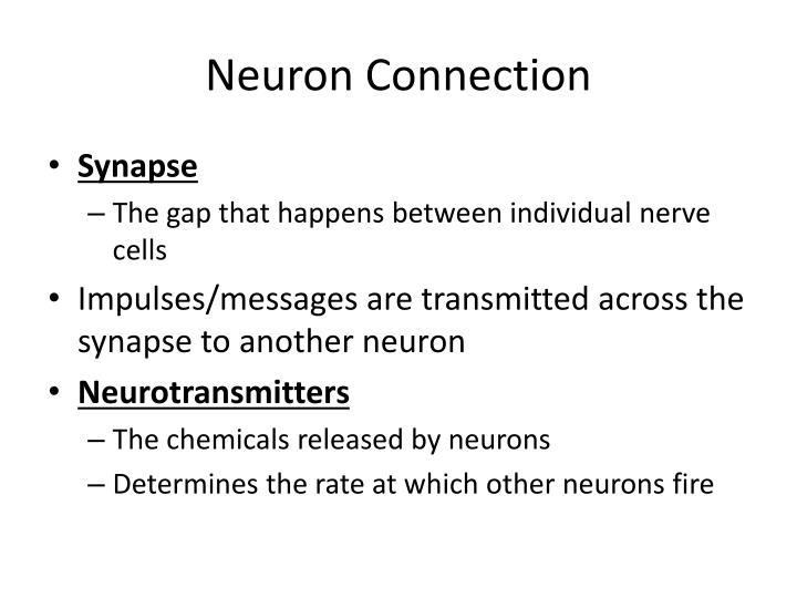 Neuron Connection
