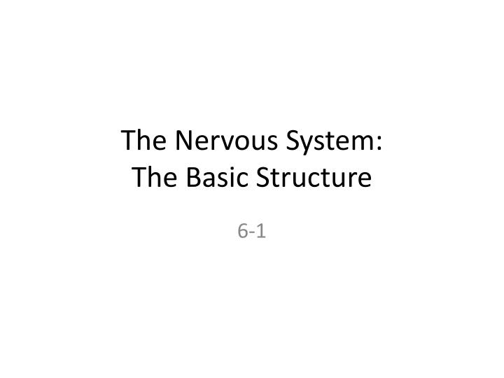 The nervous system the basic structure