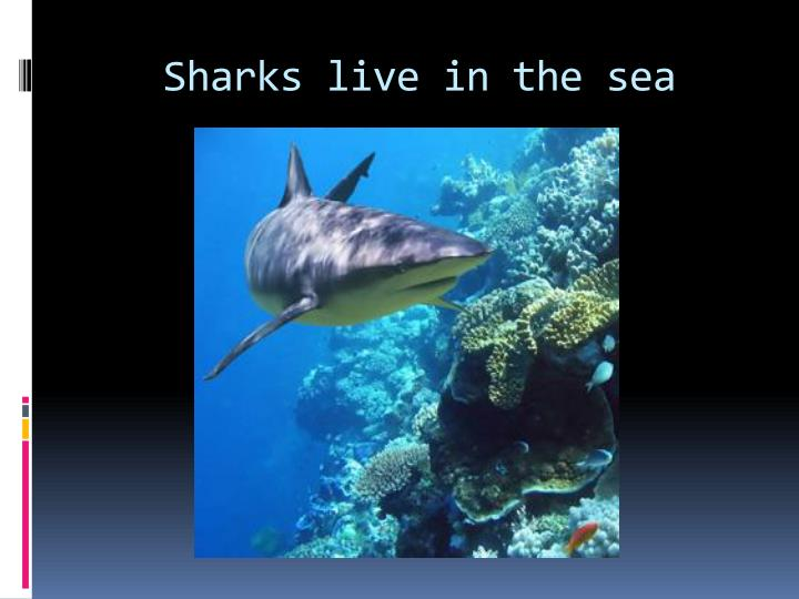 Sharks live in the sea