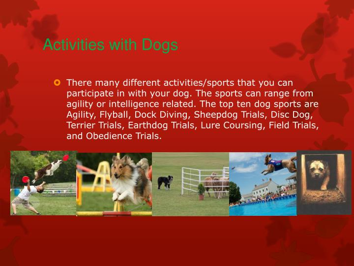 Activities with dogs