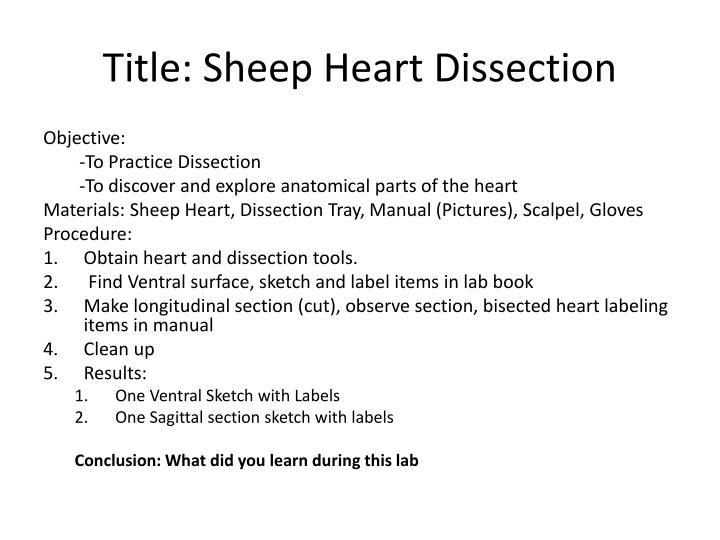 PPT - Title: Sheep Heart Dissection PowerPoint Presentation - ID:2643149