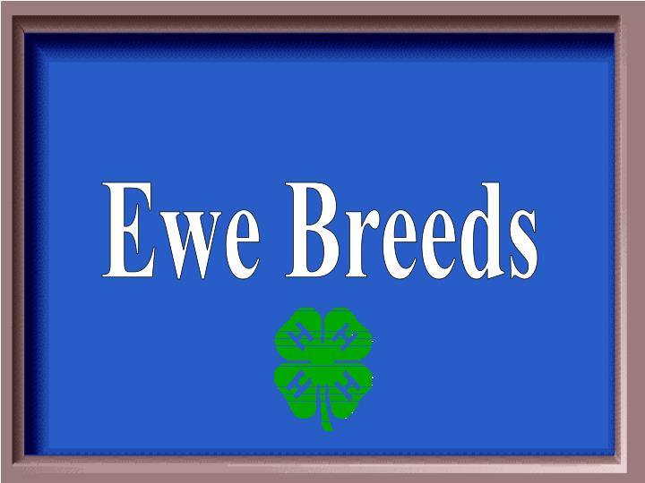 Ewe Breeds
