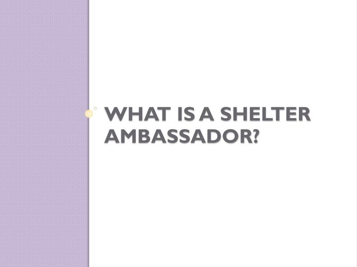 What is a shelter ambassador
