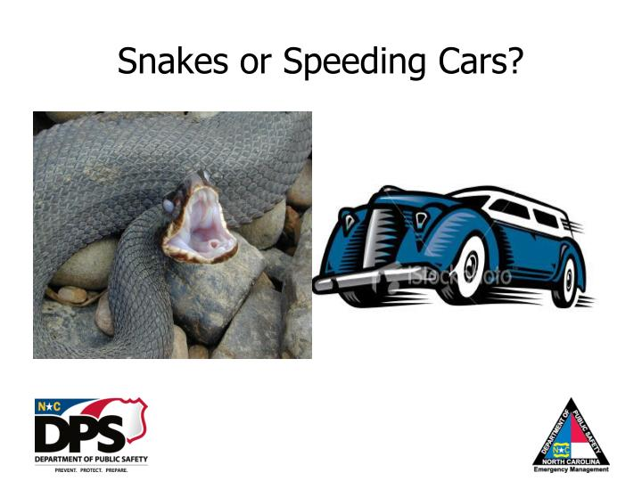 Snakes or Speeding Cars?
