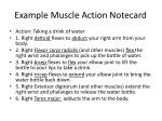 example muscle action notecard