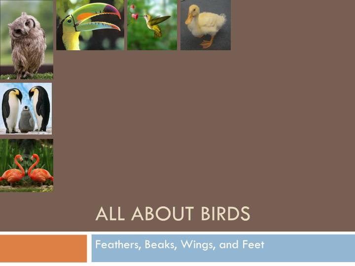 all about birds n.