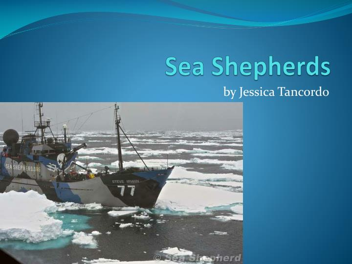 Sea shepherds
