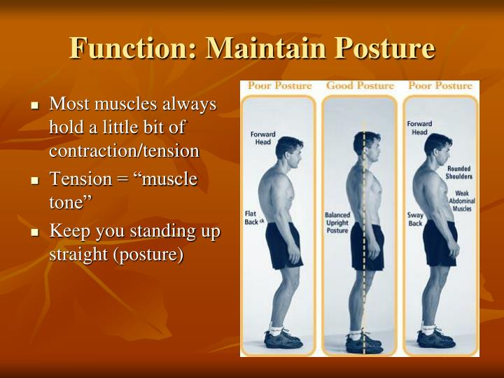 Most muscles always hold a little bit of contraction/tension