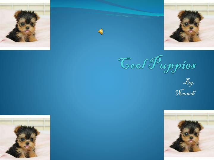 cool puppies n.