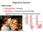 digestive system14
