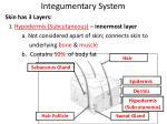 integumentary system4