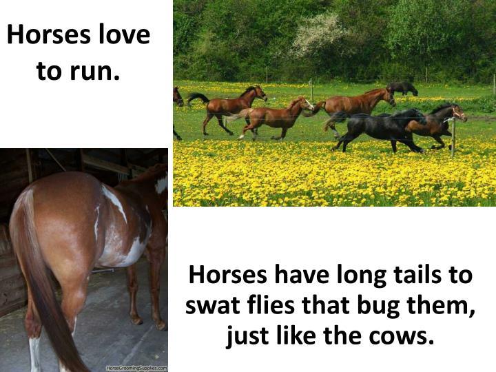 Horses love to run.