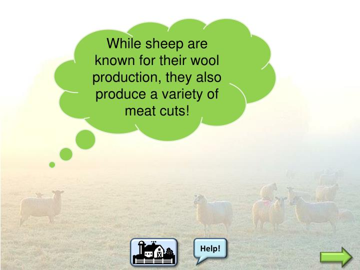 While sheep are known for their wool production, they also produce a variety of meat cuts!