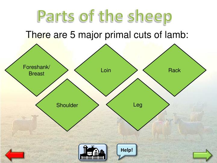 Parts of the sheep