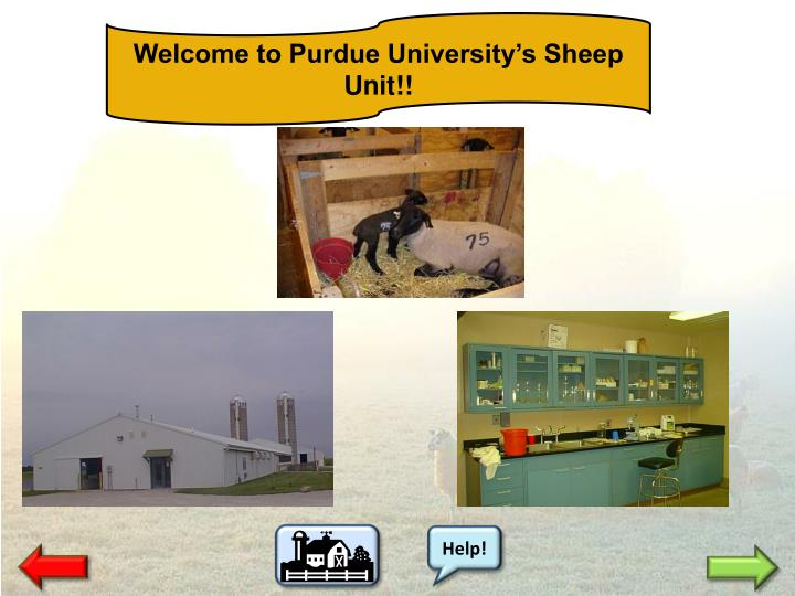 Welcome to Purdue University's Sheep Unit!!