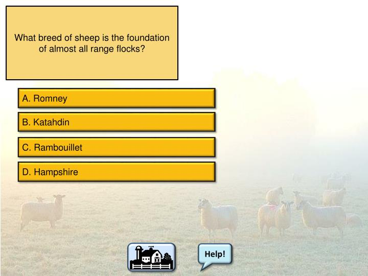 What breed of sheep is the foundation of almost all range flocks?