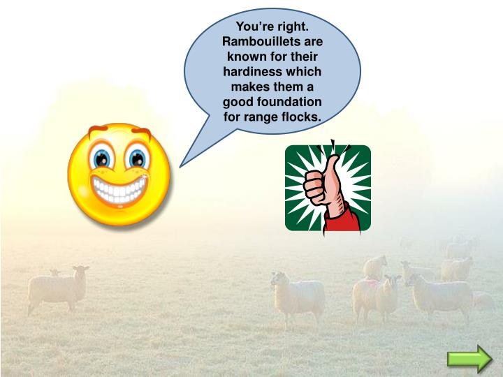 You're right. Rambouillets are known for their hardiness which makes them a good foundation for range flocks.