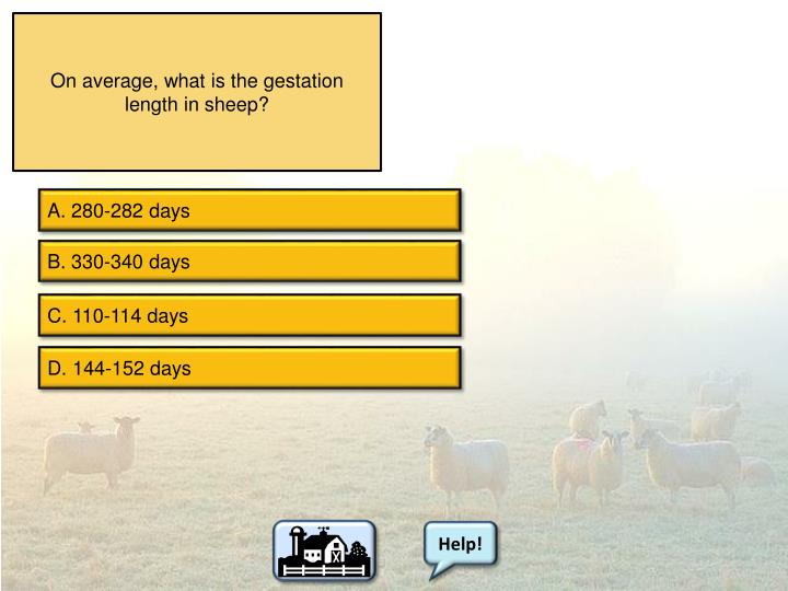 On average, what is the gestation length in sheep?