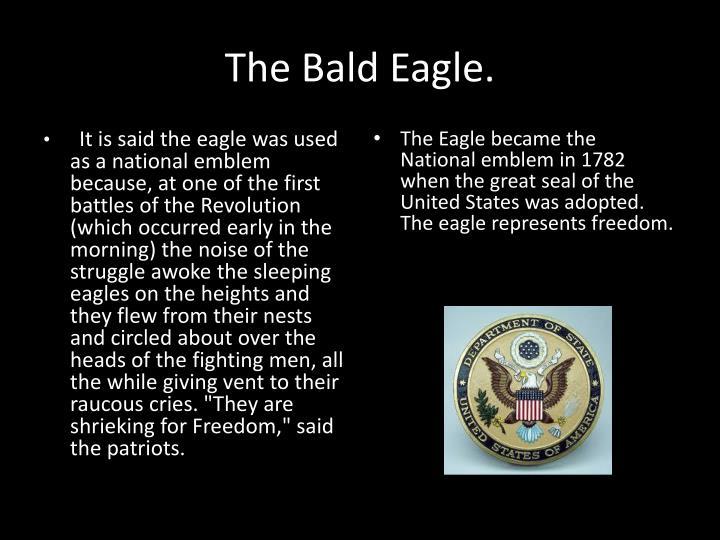 The Bald Eagle.