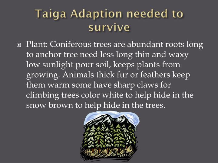 Taiga Adaption needed to survive