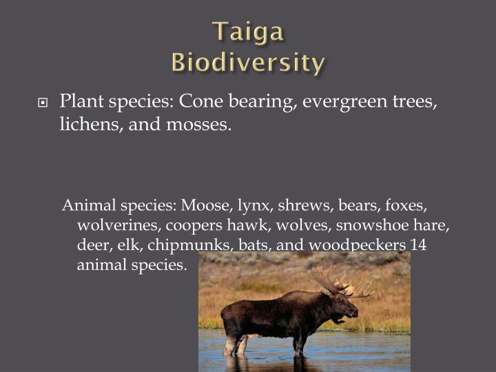Taiga biodiversity