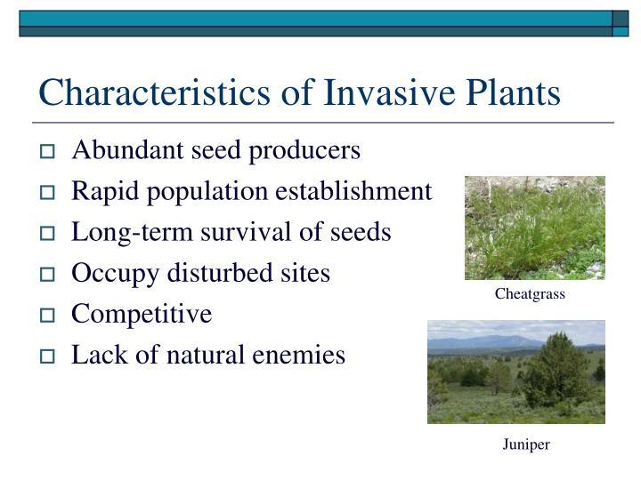 Characteristics of Invasive Plants