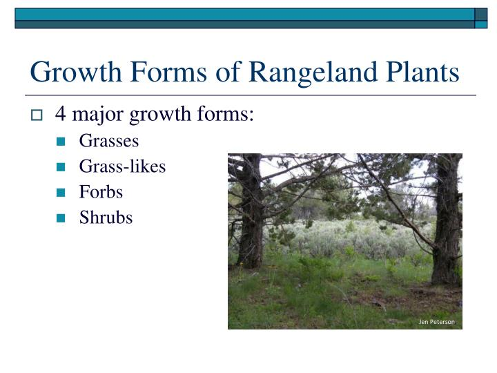 Growth forms of rangeland plants