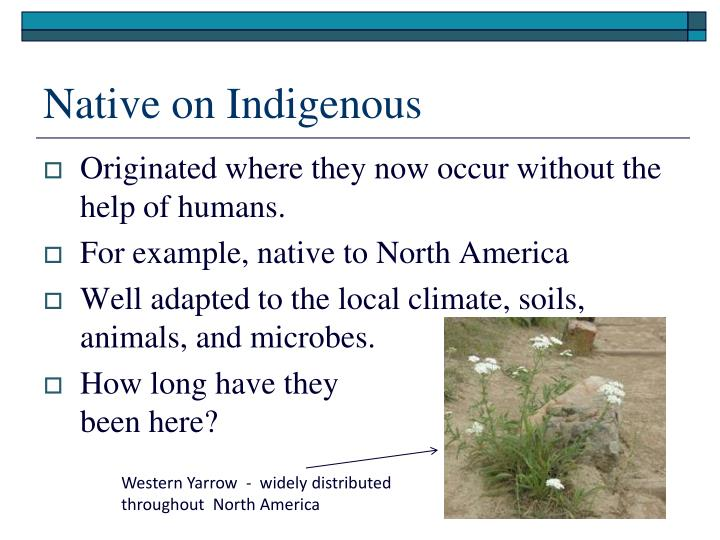Native on Indigenous